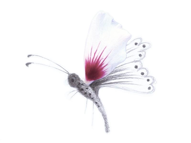 Andria-farfalla2